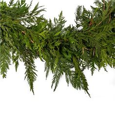 CEDAR GARLAND Create a magical feeling this holiday season by trimming your house with this Douglas Fir and Cedar Mixed Garland. Your bannister, staircase, or hallway will be transformed when decked with the traditional look of the Douglas Fir garland, and the fresh Cedar will fill your home with a wonderful aroma.