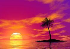 The Sun Setting summer sunset beach ocean nature tropical sea orange island palm tree Purple Sunset, Summer Sunset, Sunset Beach, Sunset Images, Sunset Pictures, Summer Wallpaper, Tree Wallpaper, Palm Tree Sunset, Palm Trees