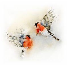 Bullfinches - Dima Rebus.  Beautiful movement