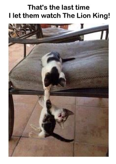 Thats the last time I let them watch the lion king - funny cat pic - http://jokideo.com/thats-the-last-time-i-let-them-watch-the-lion-king-funny-cat-pic/