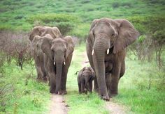 The herd of elephants saved by founder Lawrence Anthony @ Thula Thula game preserve in South Africa