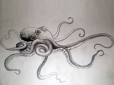 Download Free Giant Octopus With Long Tentacles Tattoo to use and take to your artist.