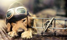 La historia de una fotgrafa y su amor por los perros  Fress