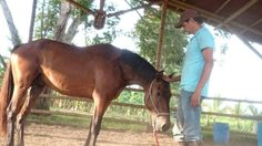 Egipto caballo lusitano Horses, Natural, Animals, Egypt, Animales, Animaux, Horse, Animal, Animais