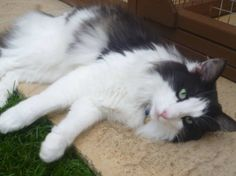 Love this cat to bits – Alfie Boy. Sent in by Karen Smy.