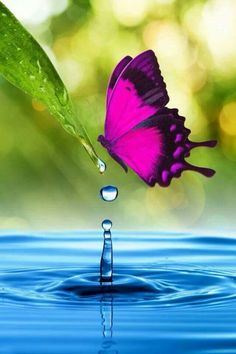Butterfly and bubble