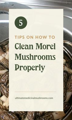 Morels are hard are quite rare, so when you have a good haul of it, make sure you clean and prepare it properly to make the most out of it. Find out the best way to clean morel mushrooms and how to do it. | Discover more about medicinal mushrooms at ultimatemedicinalmushrooms.com #medicinalmushrooms #huntingmorelmushrooms #howtocleanmorelmushrooms Mushroom Hunting, Growing Mushrooms, New Recipes, Stuffed Mushrooms, Medicine, Cleaning, Store, Tips, How To Make