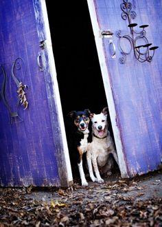 Teresa Berg Dog photography