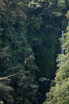 Zip lining in the Monteverde Cloud Forest, Costa Rica.
