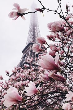 Blooming explosion 🌸 We can promote your photos in our account. Check the link in our bio for instructions: Eiffel Tower, Paris, France. Photo by 💖 Good Deeds Good. Paris Pictures, Paris Photos, Paris Photography, Nature Photography, Roses Tumblr, Paris Wallpaper, Real Nature, Pink Nature, Beautiful Paris