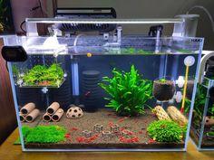 Cool Fish Tank Decorations, Aquarium Decorations, Aquarium Garden, Aquarium Landscape, Betta Fish Tank, Aquarium Fish Tank, Fish Tank Themes, Fish Tank Terrarium, Cherry Shrimp