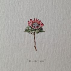 Day 234 : Officially the first time someone has booked a date in the series for their boss (just because they're awesome). 16 x 25 mm. (at Vredehoek) Cute Tattoos, Flower Tattoos, New Tattoos, Small Tattoos, Tatoos, Africa Tattoos, Native Tattoos, Protea Art, Protea Flower