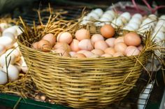 Facts about Brown Eggs #browneggs #factsbrowneggs