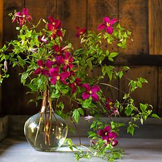 Trim the longest stems of the lower leaves, place them into the vase, and let them spill down to the counter. Tuck in shorter stems, which twine together for support.