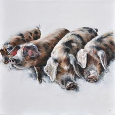 Vicky Palmer Babes oil on canvas 31.5 x 31.5 ins (80 x 80 cms) £2,950  #art #artist #painting #painter #farm #farmanimals #hounds #hunting #buyart #interiordesign #countrylife #country #countryside #pigs #dogs #cows #foxandhound