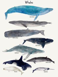 whales by Bri.buckley