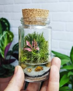 Moss Terrarium, Terrarium Plants, Planting Succulents, Planting Flowers, Terrarium Workshop, Plant In Glass, Garden Wind Spinners, Mini Aquarium, Cactus