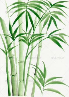 Palm bamboo - Stock Photo - Images