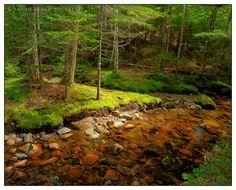 The Stream    Acadia National Park  Mount Desert, Maine