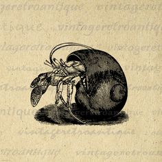 Printable Hermit Crab Digital Download Graphic Image Artwork Vintage Clip Art. High quality digital illustration. This vintage printable digital illustration graphic can be used for making prints, fabric transfers, tote bags, t-shirts, tea towels, and more. Real printable antique artwork. This digital image is high quality, large at 8½ x 11 inches. Transparent background PNG version included.