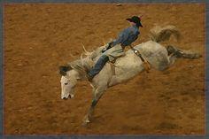 #rodeo  #cowboy  #horses