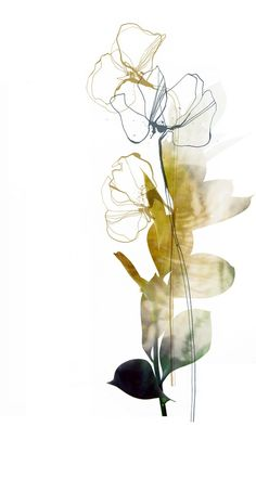 Abstract flower by nebo peklo ink and pen Digital manipulation of ink drawings Nebo Peklo watercolor flowers (by Emili Neme? Abstract Watercolor, Watercolor And Ink, Watercolor Flowers, Watercolor Paintings, Watercolours, Watercolor Artists, Abstract Oil, Ink Painting, Abstract Paintings