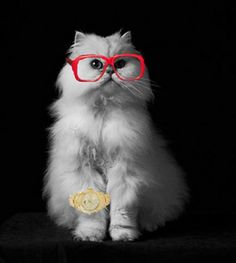 The Voice furshion statements: Purrfect the Cat copies his papa CeeLo Green via gold blinged out watch and red glasses. #TheVoice