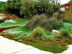 Low-Maintenance Plants and Dwarf Shrubs | DIY Low Maintenance Landscaping, Low Maintenance Plants, Landscape Design, Garden Design, Landscape Materials, Lawn And Garden, Garden Tips, Hillside Garden, Sloped Garden