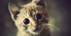 Gatti, i guardiani che proteggono le nostre anime