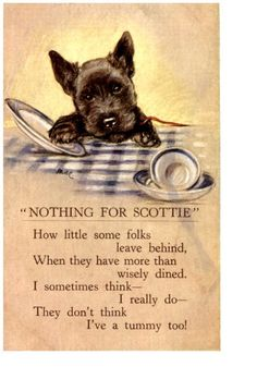 Nothing For Scottie vintage postcard  dog  Scottish terrier
