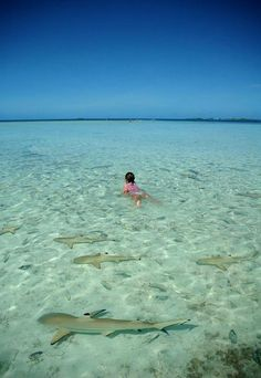 Young Girl Swimming with Juvenile Blacktip Reef Sharks, Rangiroa, French Polynesia