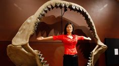 """Největší žralok v dějinách podlehl """"utajenému"""" vymírání"""