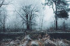 Gateway to Winter Wonderland by daniel-casson1 via http://ift.tt/2kC7trL