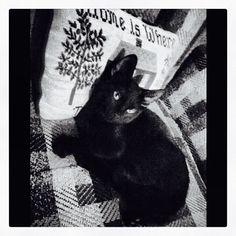 :3 #black #cat # kitten #kitty #babyboy #blackcat #blackkitty #blackkitten #yelloweyes