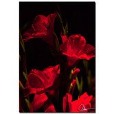 Found it at Wayfair - 'Gladiolus IV' by Martha Guerra Photographic Print on Canvas