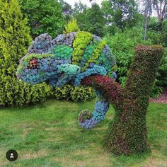 """617 Likes, 14 Comments - Kelly Lahar (@succulent_fever) on Instagram: """"I would love to have this succulent artwork in my back yardCompetition at Montreal botanical…"""""""