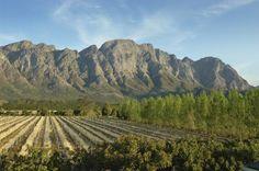 África do Sul Lua de Mel Franschhoek    South Africa Honeymoon