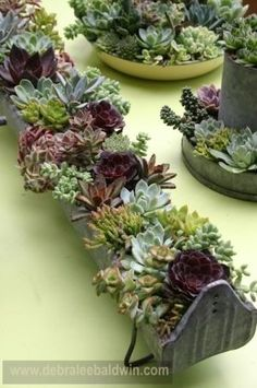 Chicken feeder trough planted with succulents, by Chicweed by catotushek