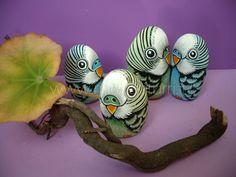 adorable - parrots - painted rocks
