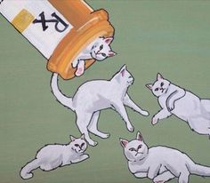 Kitty Cure