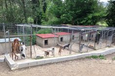 CARE has a small shelter near Sidari in the north of Corfu. The Charity started 11 years ago when 8 puppies were found close to death in a dustbin. Al...