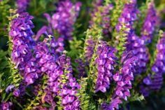 Proof herbs help heal