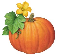 Botanical illustration of a pumpkin with its yellow flower and leaves.
