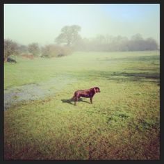 Margot in the early morning mist