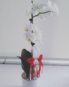 İs it really 27th birthday???  #birthday#birthdayflowers#flowers#orchid#nature#naturelover#naturephotography#natureinside#natureart#art#artlovers#artphoto#instanature#instaflower#instaart#green#healty#travel#travellover#instatravel#travelingram#architects#istanbul#married#photogram#photolovers#photography#flowerpower by bestenuriskender