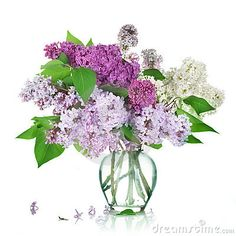 Lilacs.. would give anything if they would grow in Florida.  Always remind me of my Mom.