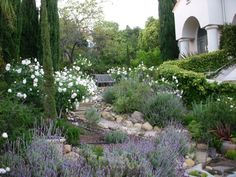 theses all do well in Napa: Mediterranean landscape: iceberg roses, lavender, rosemary, succulents Italian Garden, Tuscan Garden, Mediterranean Garden Design, Lavender Garden, Outdoor Gardens, Italian Cypress Trees, Olive Trees Landscape, Garden Design, Cottage Garden