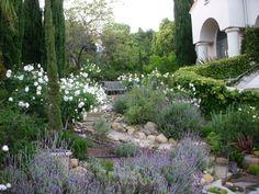 Mediterranean landscape: iceberg roses, lavender, rosemary, succulents