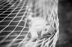 """""""Cats pride themselves on their ability to do nothing."""" --John R Breen"""