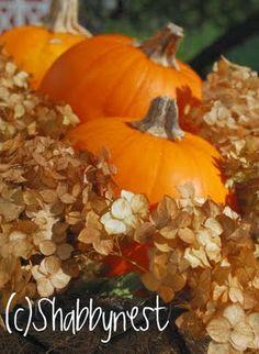 The Shabby Nest: Pretty, Frugal Autumn Decor~
